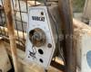 TCM Bobcat 315 Skid Steer Loader (7)